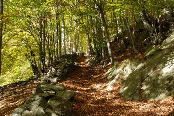 sentiero nel bosco autunnale
